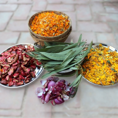veg_dyeing_raw_material